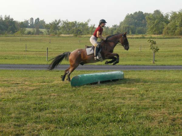 Horsepictures064